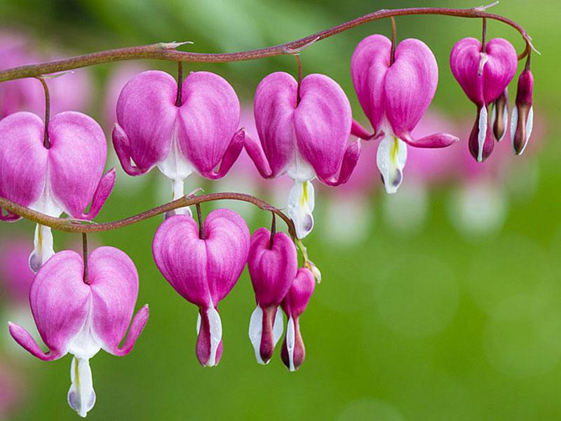 các loài hoa đẹp 5