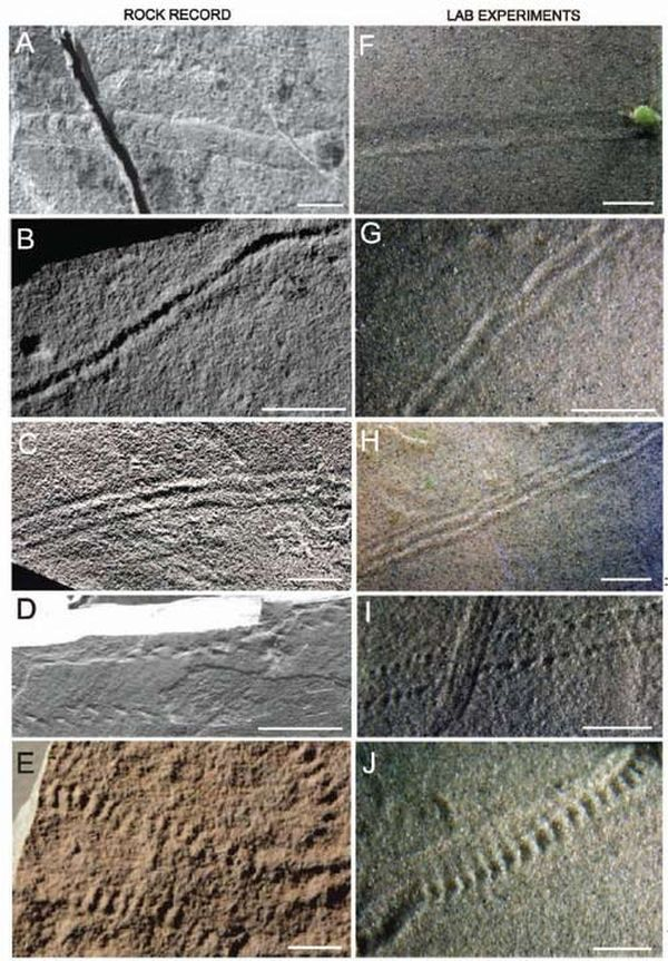 Dấu hiệu về sự sống đầu tiên trên Trái Đất có thể là vi khuẩn