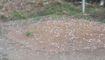 Mưa đá có thể xảy ra ở Bắc bộ