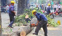 Hà Nội thừa nhận thiếu minh bạch khi chặt cây xanh