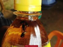 Sự vụ nổi váng hình nấm trong sản phẩm nước C2 của công TNHH URC Việt Nam: Cơ quan chức năng cần sớm vào cuộc