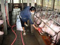 Bất cập thị trường thức ăn chăn nuôi: Bài toán giá, giải sao đây?