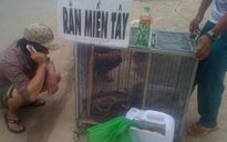 Đồng Nai: Tá hỏa rắn độc tràn xuống đường phố Biên Hòa