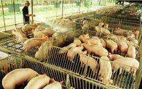 Hòa Phát lập thêm công ty thức ăn chăn nuôi