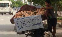 Dân Việt ăn quả đắng với mận, đào Trung Quốc gắn mác Sapa