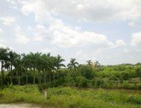 Hấp dẫn du lịch miệt vườn Bách Thuận – Thái Bình