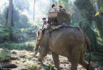 Thái Lan: Voi giết chết quản tượng rồi bỏ trốn vào rừng cùng 3 du khách trên lưng