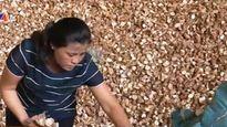 Chính phủ chấp thuận 'lùi' thuế xuất khẩu sắn