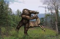 Quái vật Bigfoot lại tiếp tục xuất hiện?