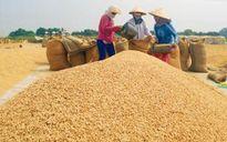 Phụ thuộc Trung Quốc, xuất khẩu gạo lĩnh đủ nóng-lạnh