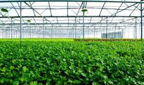 3.500 tấn nông sản sạch mỗi năm sắp xuất xưởng