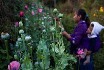 Những người âm thầm tiếp tay cho tội phạm ma túy ở châu Mỹ