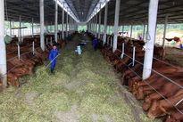 Để trở thành nước nông nghiệp hùng mạnh