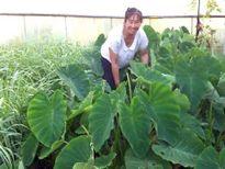Người Việt cần cù bám trụ làm nông ở điểm nóng Ukraine