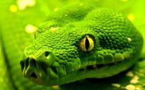 Loài rắn trong văn hóa và võ thuật