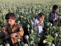 Ngôi làng bị cô lập giữa thủ phủ ma túy