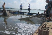 Dân đổ cá chết trước cổng nhà máy để phản đối xả thải