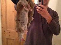Chuột khổng lồ xuất hiện - Cả vùng Merseyside hoang mang
