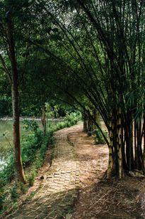 """Lạc vào """"rừng tre"""" giữa phố Đà Nẵng"""