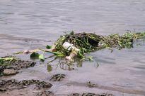 Hoảng hốt phát hiện thi thể cô gái nổi trên sông Sài Gòn