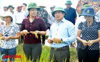 """""""Điểm tựa"""" xây dựng nông thôn mới ở Cẩm Thành"""