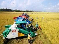 Đồng Nai đầu tư 42 tỷ đồng xây dựng cánh đồng mẫu lớn