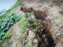Huyện Ba Vì: Cần xử lý nghiêm việc khai thác cát trái phép