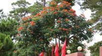 Cây độc được trồng khắp nơi, kể cả trong nhà!