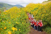 Các địa điểm chụp ảnh hoa dã quỳ đẹp nhất 3 miền
