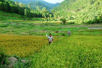 """Ngôi làng """"nguyên thủy"""" trong rừng thẳm Lâm Đồng"""