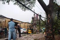 Cây đổ hàng loạt sau mưa, đè người đi đường bị thương