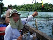 Báo động cá có hại