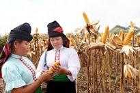 Ứng dụng tiến bộ kỹ thuật, hình thành các vùng sản xuất chuyên canh ở Sơn La