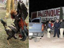 Xả súng đẫm máu, 10 người bị bắn chết trong một xới chọi gà