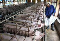 Hà Nội đầu tư 2.222 tỷ đồng xây dựng chuỗi cung cấp thực phẩm sạch