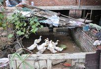 Lạ đời chuyện... trồng rau, thả cá, nuôi gà trong biệt thự có giá vài chục tỷ đồng