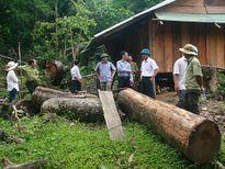 Khởi tố hình sự vụ phá rừng phòng hộ sông Tranh