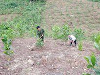 Trồng bù gần 13.000ha rừng tại 18 dự án thủy điện