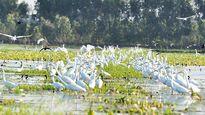 Láng Sen (Long An) được công nhận là khu Ramsar thứ 7 của Việt Nam