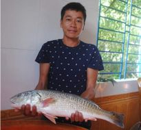 Ngư dân câu được cá sủ vàng nửa tỷ, xã cử công an đến bảo vệ