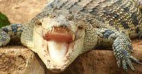 Những vụ phạm tội kỳ lạ liên quan đến động vật
