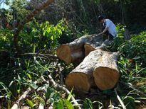 20ha rừng phòng hộ thủy điện bị tàn phá: Đùn đẩy trách nhiệm!
