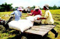 Giá nông sản trong nước tháng 11 biến động nhẹ