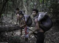 Kỳ lạ bộ tộc ở Amazon cho động vật hoang dã bú sữa như con