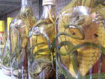 Những điều cần biết khi ngâm rượu rắn
