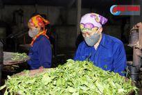Dự án Phát triển nông nghiệp Hà Tĩnh: Hành động vì môi trường!