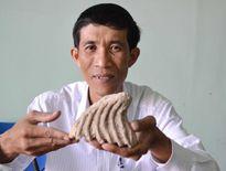 """Sự thật về vật thể nghi """"răng voi hóa thạch"""" ở Kiên Giang"""