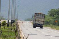 Trâu bò phá hàng loạt cọc tiêu trên đường về cảng Chân Mây