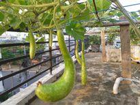 Gia đình bác sĩ ở Đà Nẵng gây sốt khi chia sẻ cách trồng rau sạch