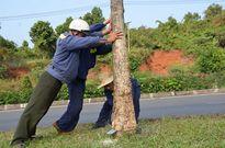 Chi tiền tỷ trồng cây 'lạ' rồi lại chặt bỏ